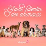Saint Valentin des animaux 2021 : le site Veepee organise une nouvelle grande collecte digitale pour les refuges