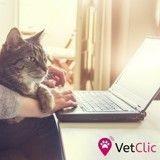 VetClic : prendre rendez-vous chez le vétérinaire n'a jamais été aussi simple !