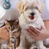 Vers une médecine vétérinaire plus connectée ?