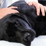 Elle s'absente de son travail car son chien est gravement blessé : son patron prend une décision radicale