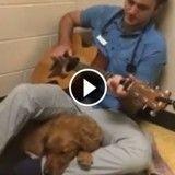 Pour rassurer les animaux hospitalisés, ce vétérinaire leur chante des chansons (Vidéo du jour)