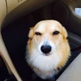 10 photos hilarantes de chiens qui comprennent qu'ils vont chez le vétérinaire et pas au parc