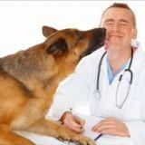 Vétohouté : la chanson des vétérinaires en colère (Vidéo du jour)