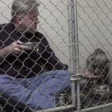 Trop effrayé pour se nourrir, ce pitbull a reçu l'aide inespérée d'un vétérinaire (Vidéo du jour)
