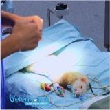 «Vétérinaires, leur vie en direct» : la nouvelle émission de TF1