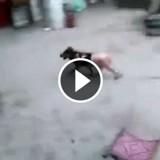 La vidéo d'un chien en train d'être cuit vivant pour être mangé choque le monde entier