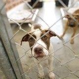 Corée du Sud : le commerce de la viande canine en déclin