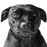 Un homme frappe un chien sans raison, le toutou lui mord le pénis !