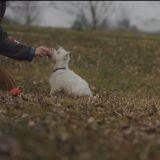 """Comment apprendre l'ordre """"assis"""" à son chien ? La réponse en vidéo"""