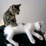 Un chaton masse un autre chaton (Vidéo du jour)