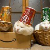 Les meilleures vidéos de chat (Vidéo du jour)