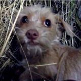 Bouleversant : une vidéo pour tous les chiens abandonnés