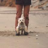 Comment apprendre la marche enfantine à son chien ? La réponse en vidéo !