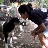 Ils sauvent une chienne errante en train d'agoniser (Vidéo du jour)