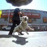 La vie à travers les yeux de votre chien (Vidéo du jour)