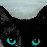La Vie Secrète des Chats : de nouveaux mystères percés dans le deuxième épisode
