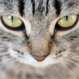 La Vie Secrète des Chats : Glissez-vous dans la peau d'un félin le temps de l'épisode 4 !