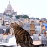 « La vie secrète des chats » : une émission pour mieux comprendre les comportements de nos chats
