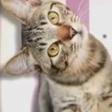 La vie secrète des chats Saison 3 : Les matous sont de retour sur TF1