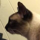 Sur Internet, elle tombe par hasard sur la photo d'un vieux chat : son coeur s'emballe en 1 seconde !