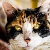 Une femme dépose un chat errant chez le vétérinaire : il scanne sa puce et a le plus grand choc de sa carrière
