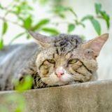 Comment bien s'occuper d'un vieux chat ?