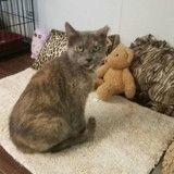 Adopté après 5 ans d'attente, ce vieux chat a fait pleurer tout le refuge !