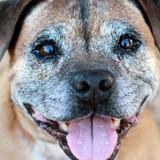 Edito : La Journée Mondiale des Animaux ne dure que 24h, mais la réalité des animaux de refuges, elle, est bien plus longue