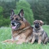 Le caractère de mon chien peut-il changer avec l'âge ?