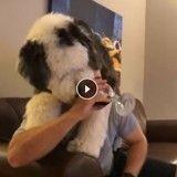 Ce chien qui tente en vain de boire du vin serait-il alcoolique ? (Vidéo)