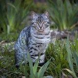 Nutrition du chat : respectez le carnivore qui est en lui grâce à la gamme VETERINARY HPM®