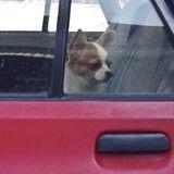 Pourquoi il ne faut pas laisser son animal enfermé dans une voiture