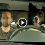 Ce chien laisse son maître enfermé dans la voiture pendant qu'il part faire des courses !