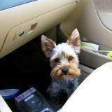 En voiture avec son chien : attention danger !