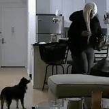Elle fait garder ses chiens et regarde sa vidéo de surveillance : c'est le choc !
