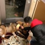 Héros : Ce chien s'est sacrifié pour protéger son jeune maître des voleurs !