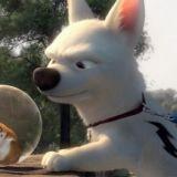 Les chiens stars de cinéma