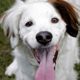 Une compétition oppose les chiens les plus chanceux des États-Unis