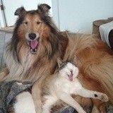 Issu d'un sauvetage, ce chaton a été adopté par une chienne