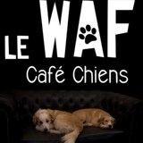 Le Waf, premier café des chiens de France, vient d'ouvrir!