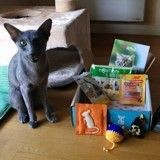Top 10 des réactions de vos chats face à leur Wamiz Box