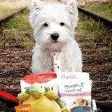 Top 10 des réactions de vos chiens face à leur Wamiz Box