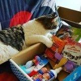 10 chats et chiens qui découvrent avec joie leur Wamiz Box