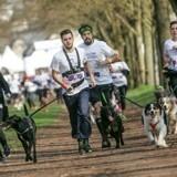 La Wamiz Run, l'occasion rêvée de participer à votre premier cani-cross !