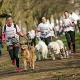 Vous faites du cani-cross avec votre chien ? Dépêchez-vous, les inscriptions à la Wamiz Run sont ouvertes !