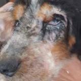 Elle trouve un chien laissé pour mort dans son jardin, des milliers d'inconnus décident de l'aider (Photos)