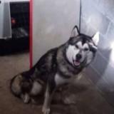 Mobilisation pour sauver Wang, le chien enfermé dans une cave à Rouen