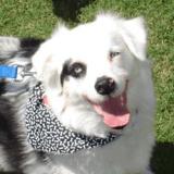 Whiskey, un brave toutou sauvé de l'euthanasie et devenu chien de thérapie