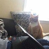 Depuis qu'elle l'a adopté, ce chat ne s'arrête pas de dévorer des yeux son humaine