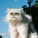 """Ce chat """"moche"""" est devenu une star sur Instagram"""